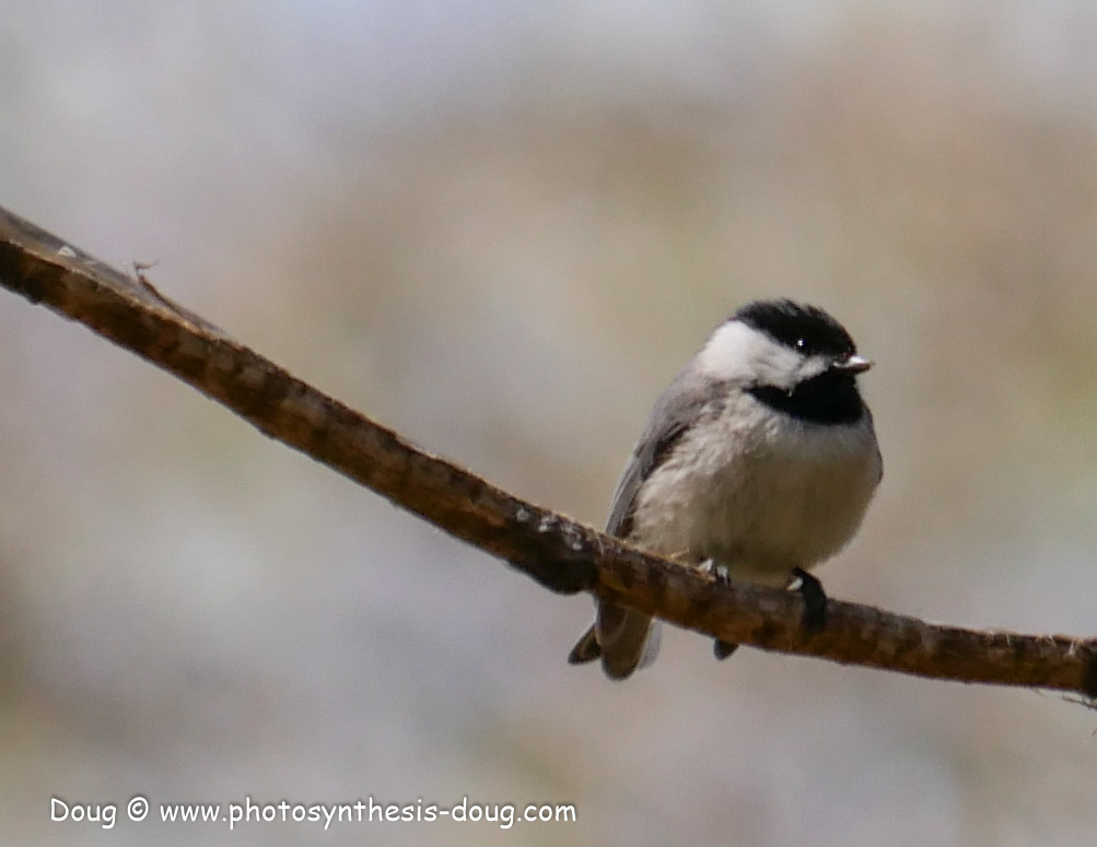 Merkle WLR April birds-1030590.JPG