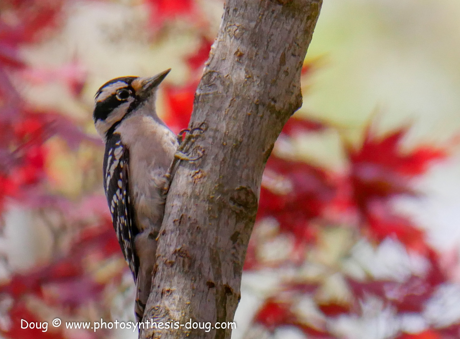 Merkle WLR April birds-1030580.JPG