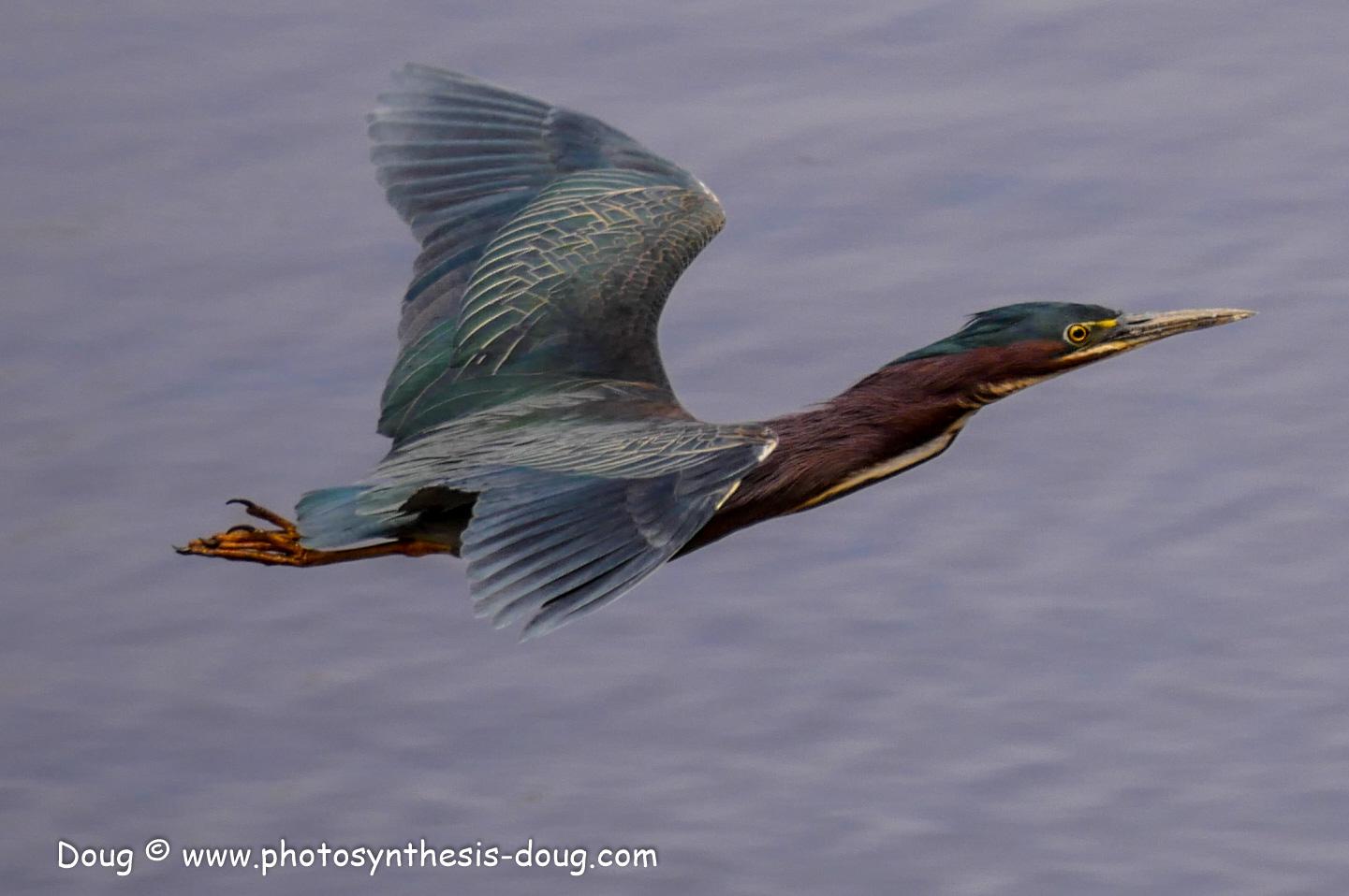 Merkle WLR April birds-1030643.JPG