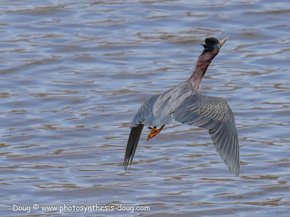 Merkle WLR April birds-1030644.JPG