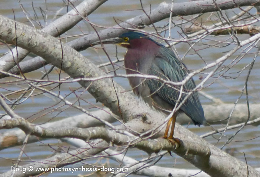 Merkle WLR April birds-1030653.JPG