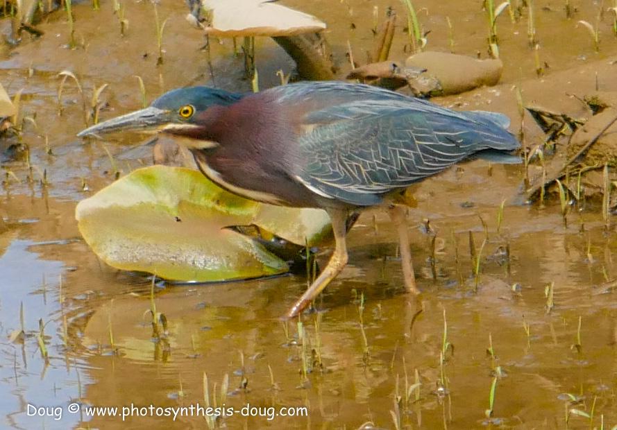 Merkle WLR April birds-1030690.JPG
