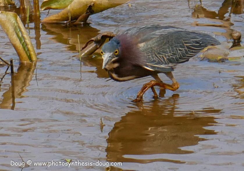 Merkle WLR April birds-1030708.JPG