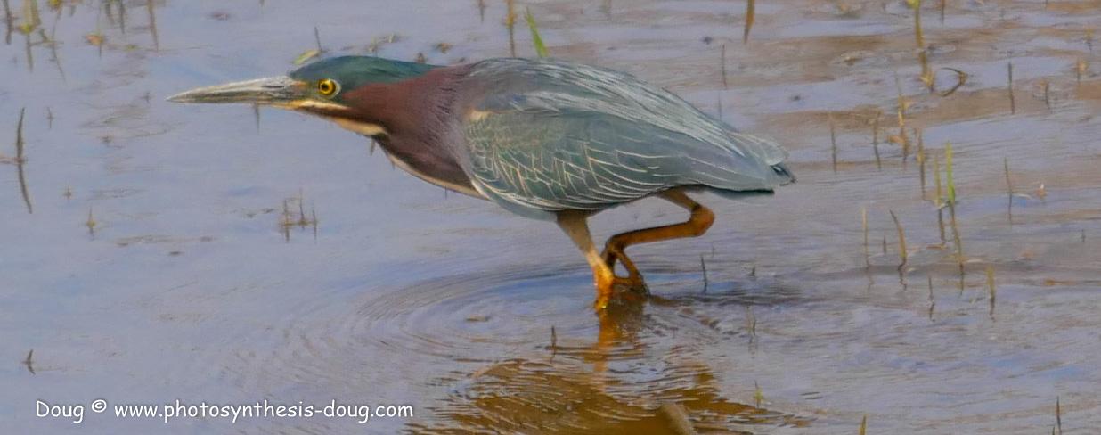 Merkle WLR April birds-1030717.JPG
