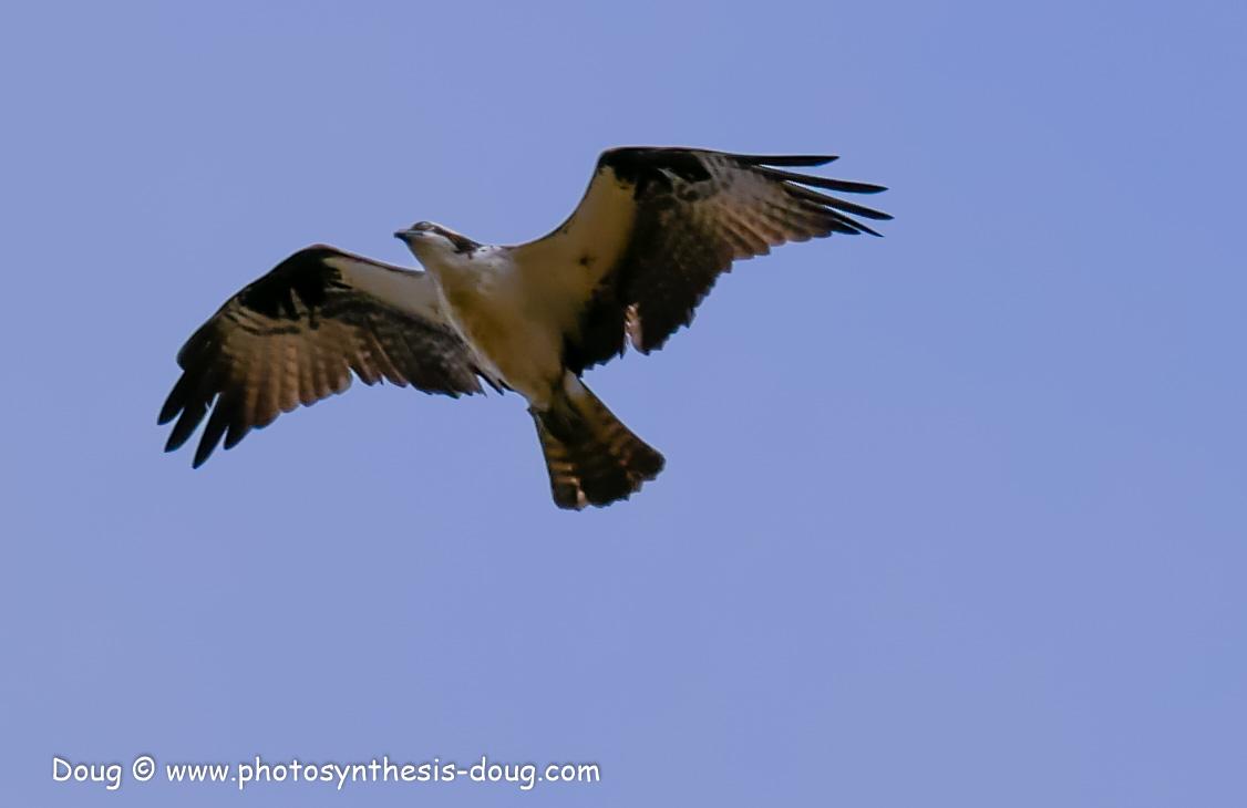 Merkle WLR April birds-1030898.JPG