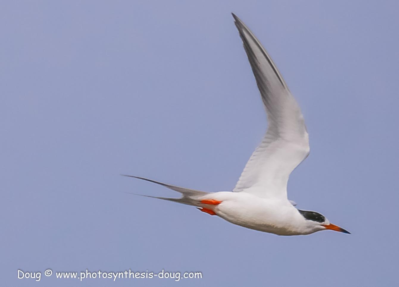 Merkle WLR April birds-1040046.JPG