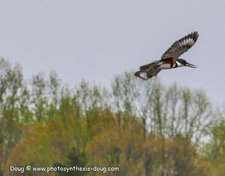 Merkle WLR April birds-1030942.JPG