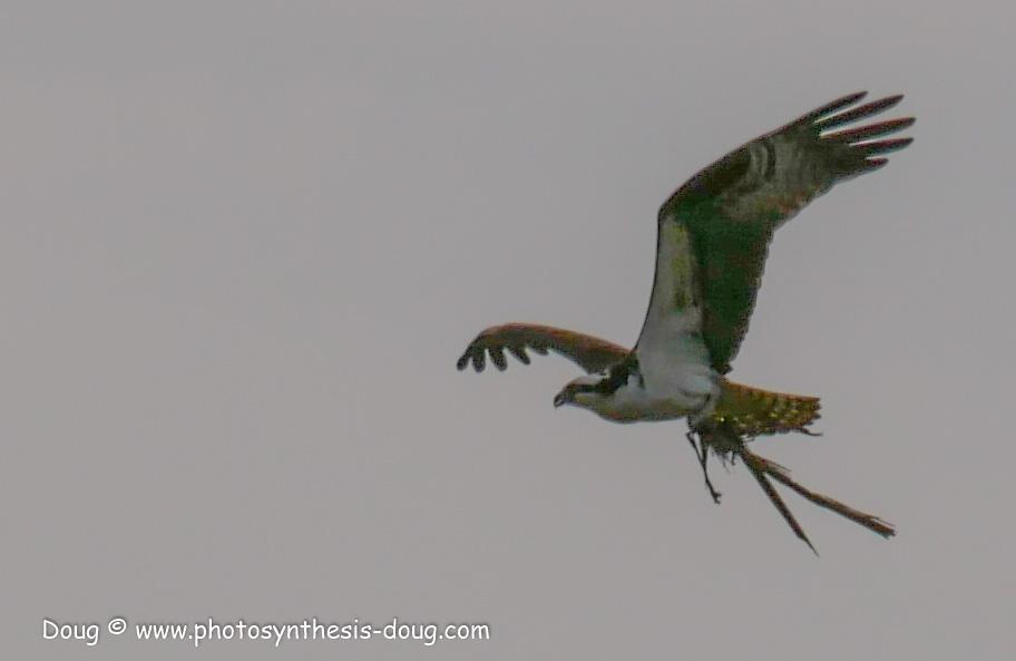 Merkle WLR April birds-1040078.JPG