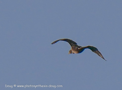 bird-1050582.JPG