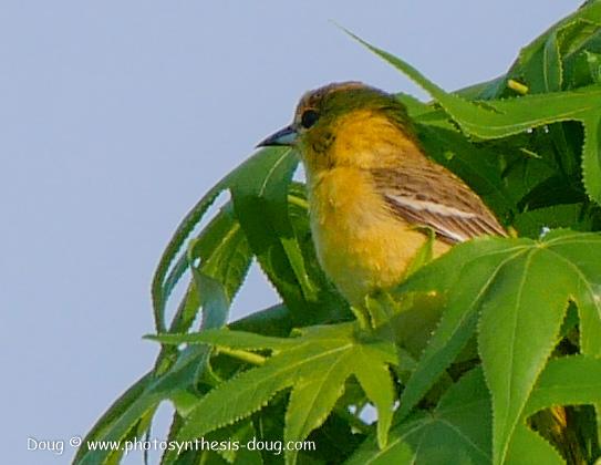 bird-1050645.JPG