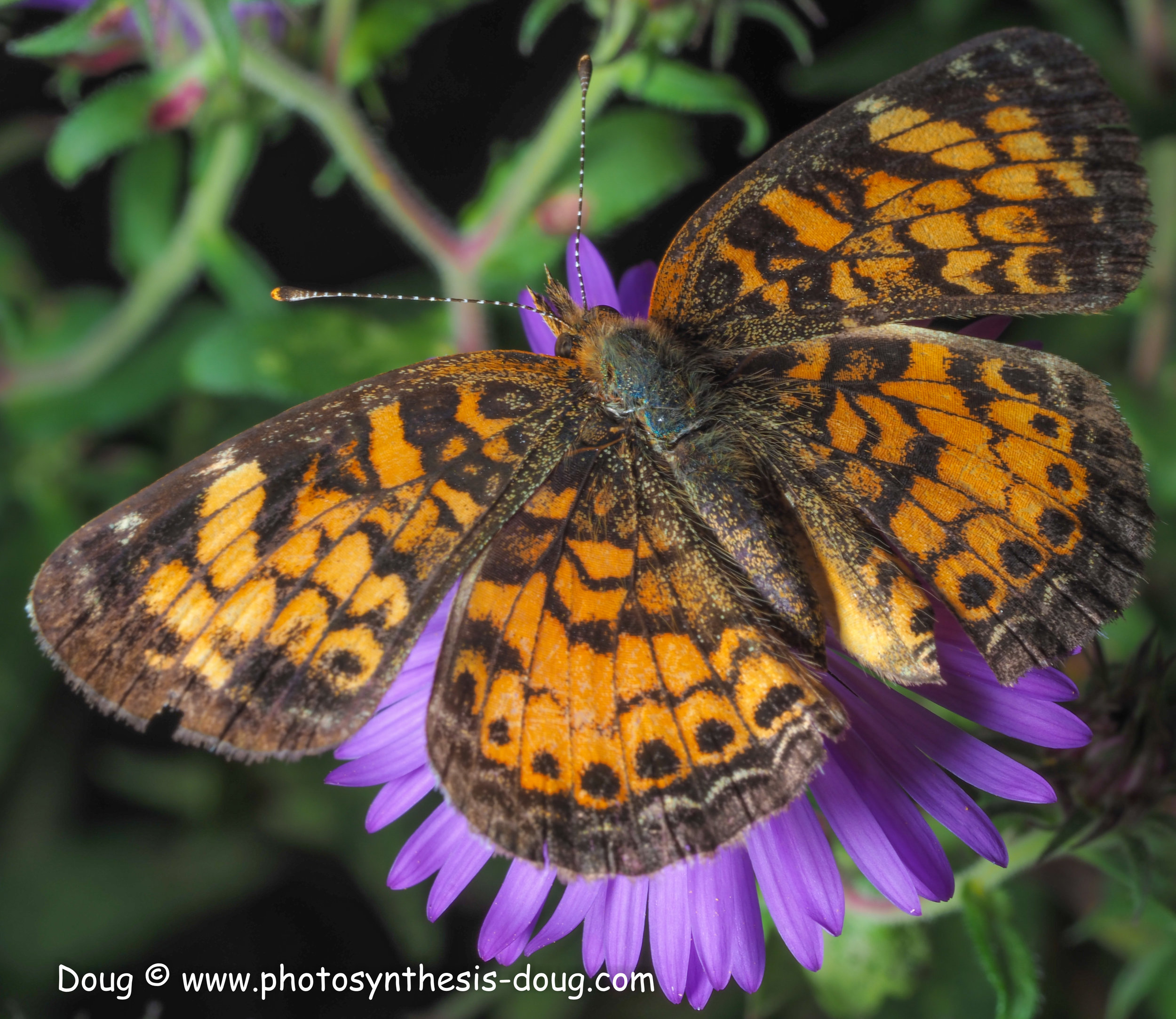 aster and butterfly-021005.JPG