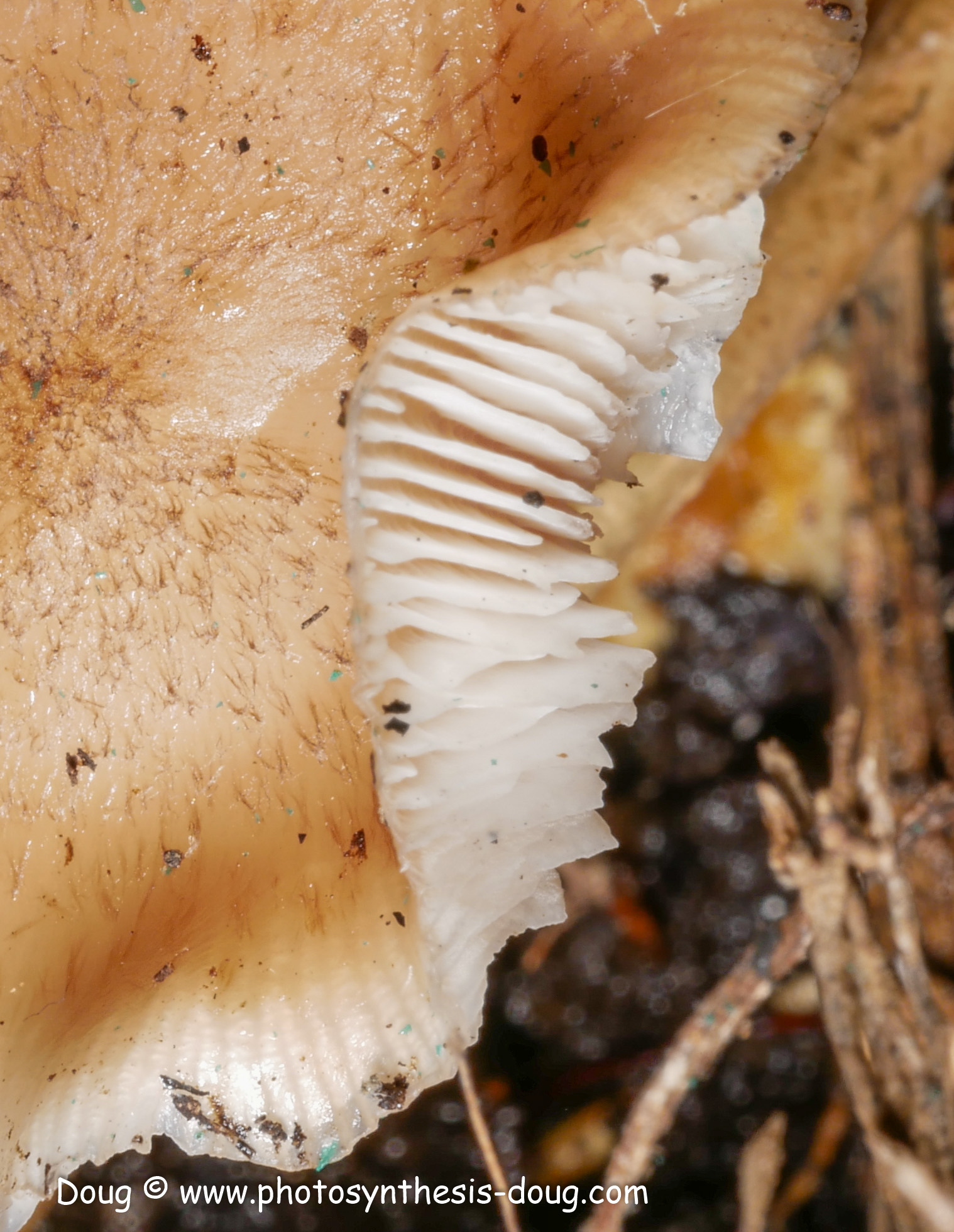 mushrooms-1130235.JPG