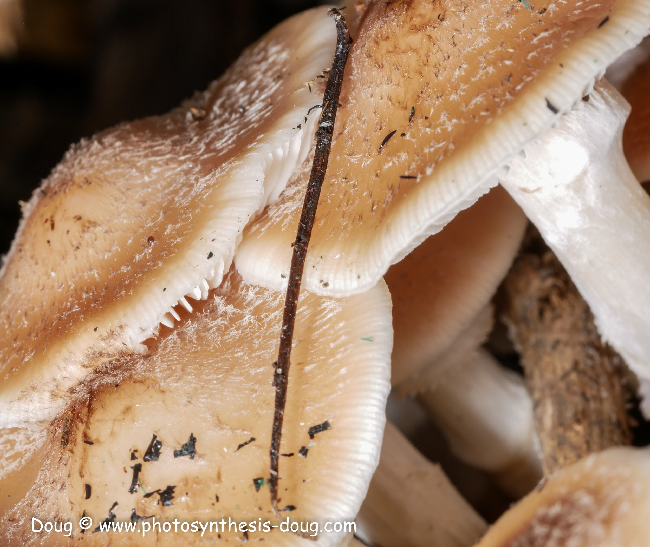 mushrooms-1130225.JPG