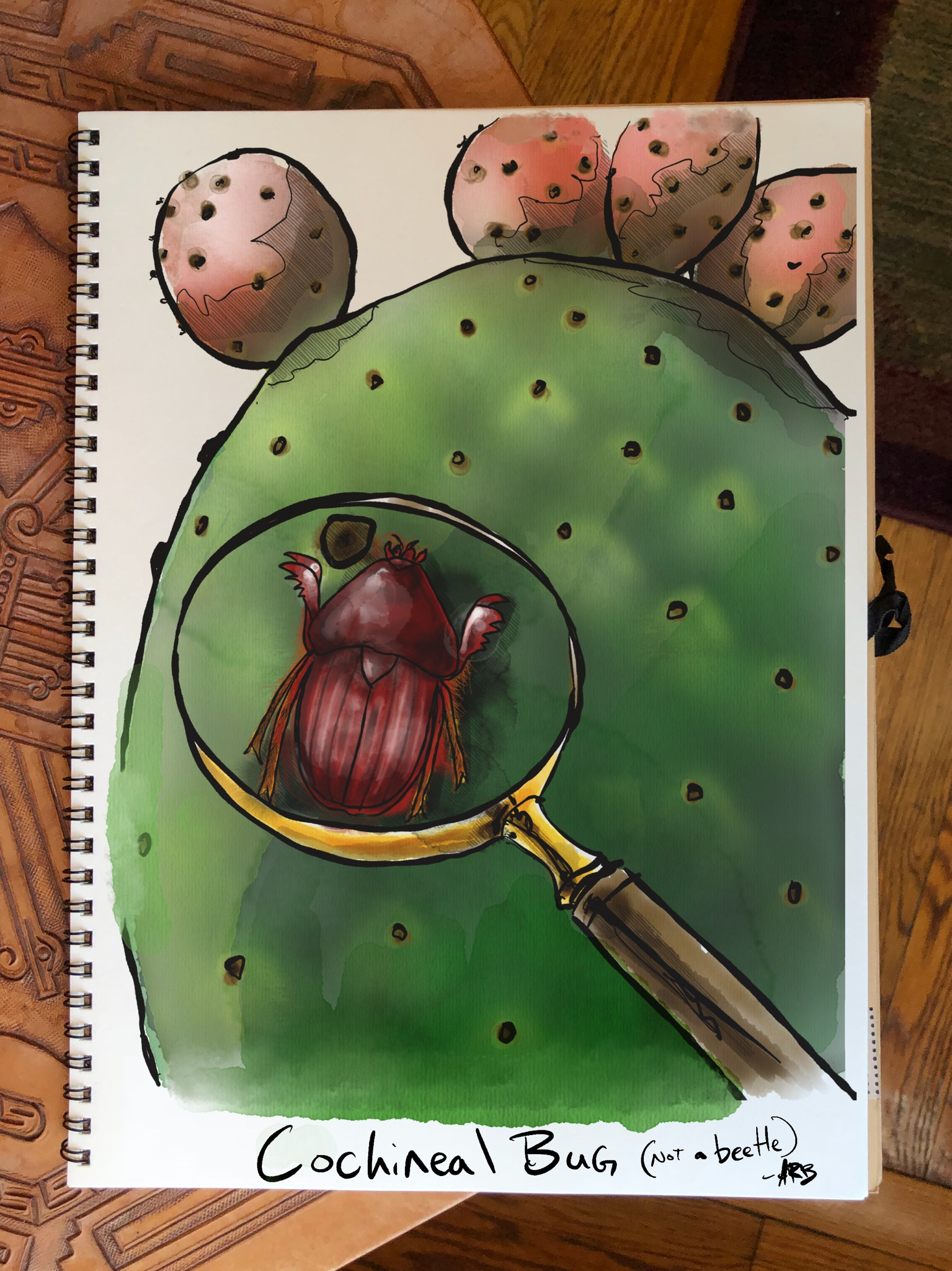 cochineal bug used for carmine red dye andrew bohrer.jpeg