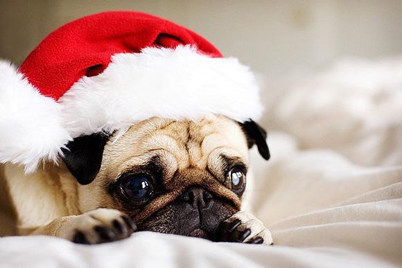 merry-christmass-l.jpg