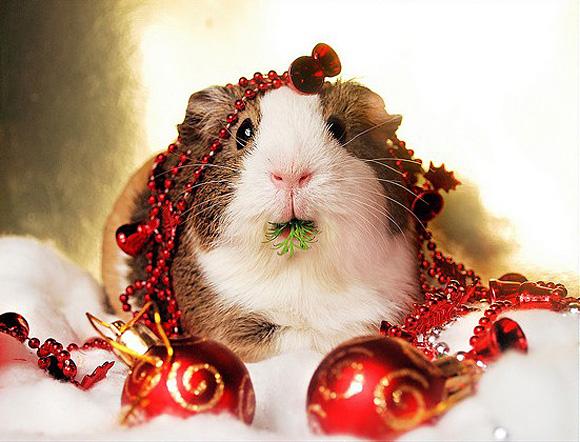 Christmas-Balbinka-l.jpg