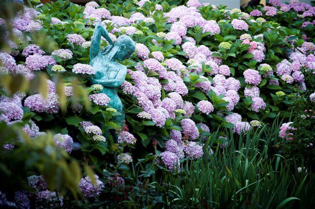 Hydrangea shots Freedom 2011 016.jpg