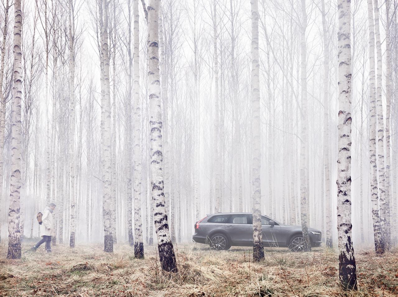 Bjorkskogen.jpg