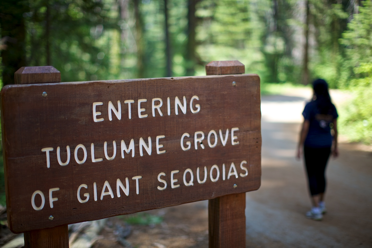 Hike along the giant sequoias