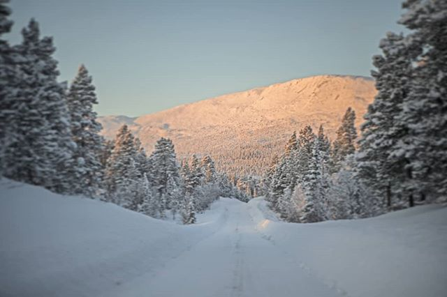 During the #winter the #sun stay pretty close to the horizon in #swedishlapland. It makes the days short, but also gives some nice soft light.  #reportage for @jagtvildtogvaaben  #hunt arranged by NordGuide  #lapland #letsgohunting #capercaillie #skogsfugljakt #jaktbilder #jakt #jagt #adventure #birdhunting #coldadventures #d5 #nikond5 #nikon #friluftsliv #wildernessculture #wilderness #thegreatwild #mountains #tiur #unspoilednature #intotheunknown #itsinmynature #photojournalism #sweden #sverige