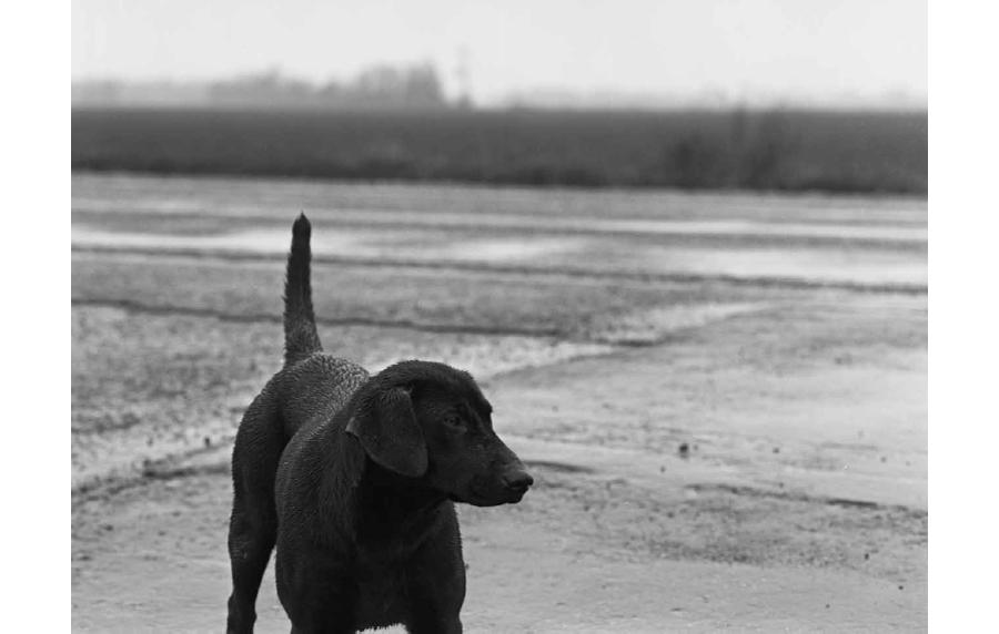 delta_dogs_maude_clay_1.jpg