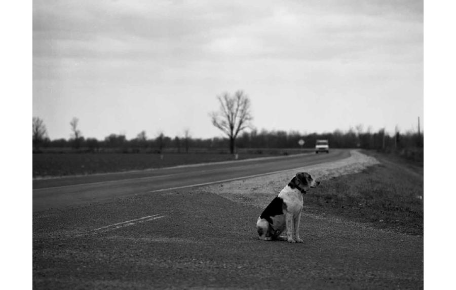 delta_dogs_maude_clay_2.jpg