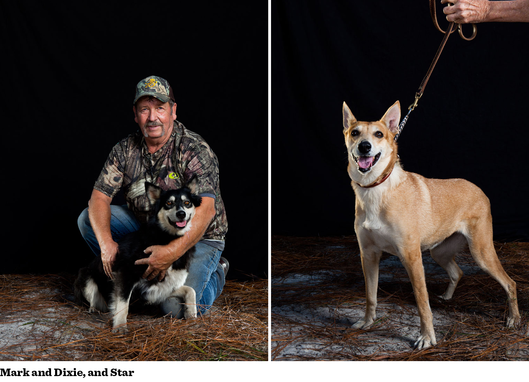 carolina-dog-gallery-6.png