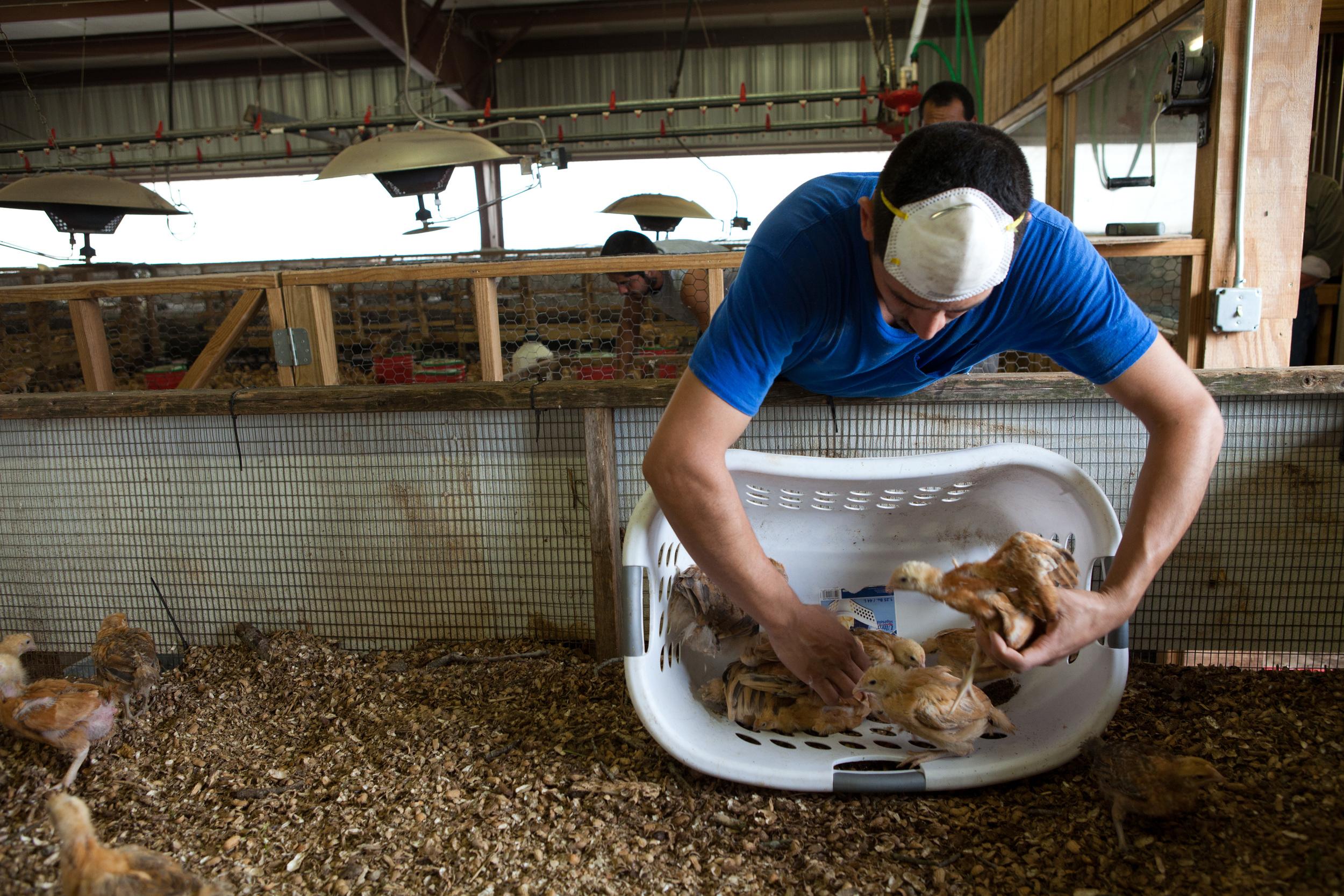 Will Harris & White Oak Pastures Farm: The Dirt Underneath
