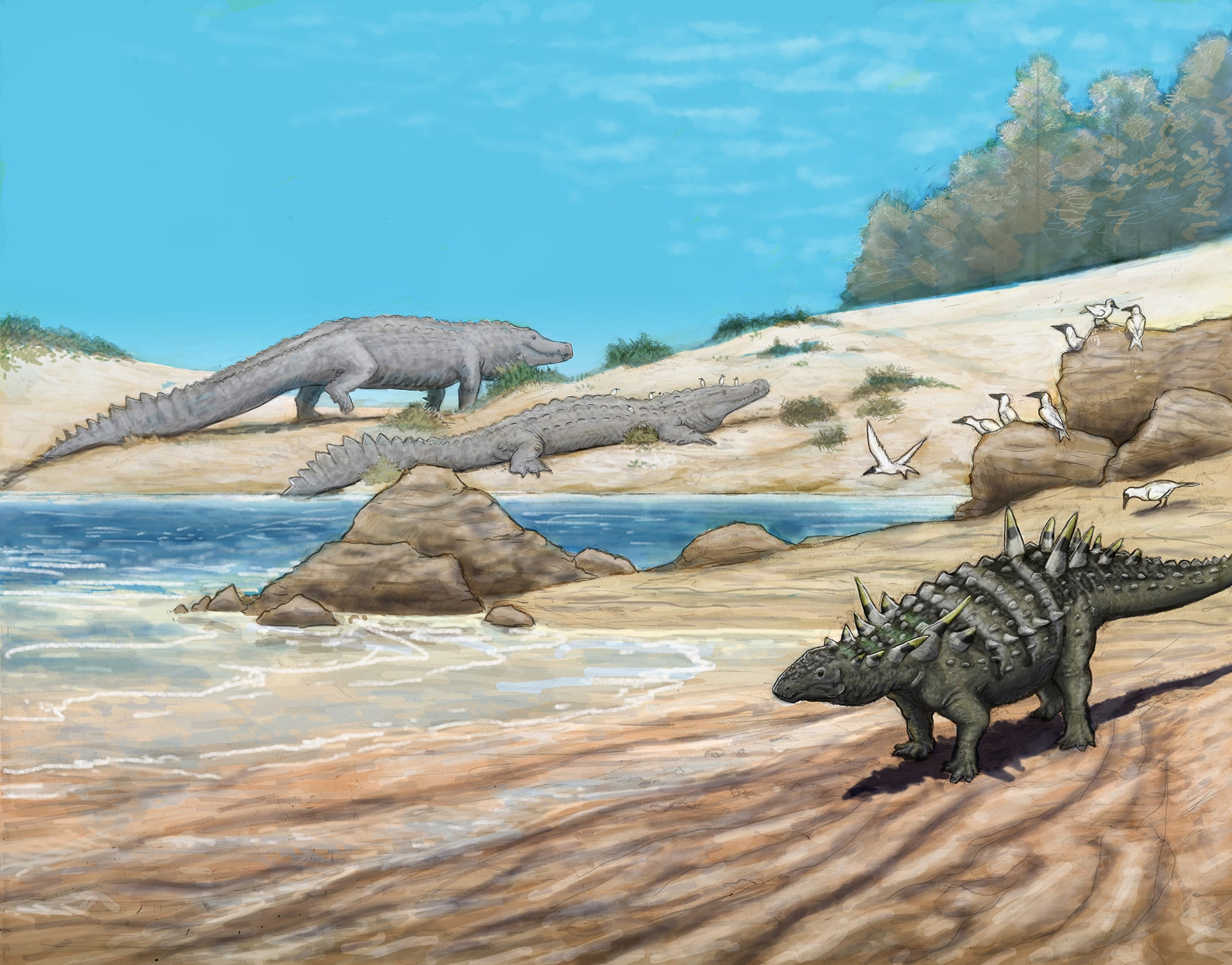 In the early afternoon, a Nodosaur comes down to the shore to scavenge for seafood. Across the inlet lie a pair of massive Deinosuchus. Bold Icthyornis--toothed birds--squabble on the rocks.