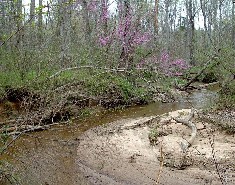 Panther Creek in Spring.jpg