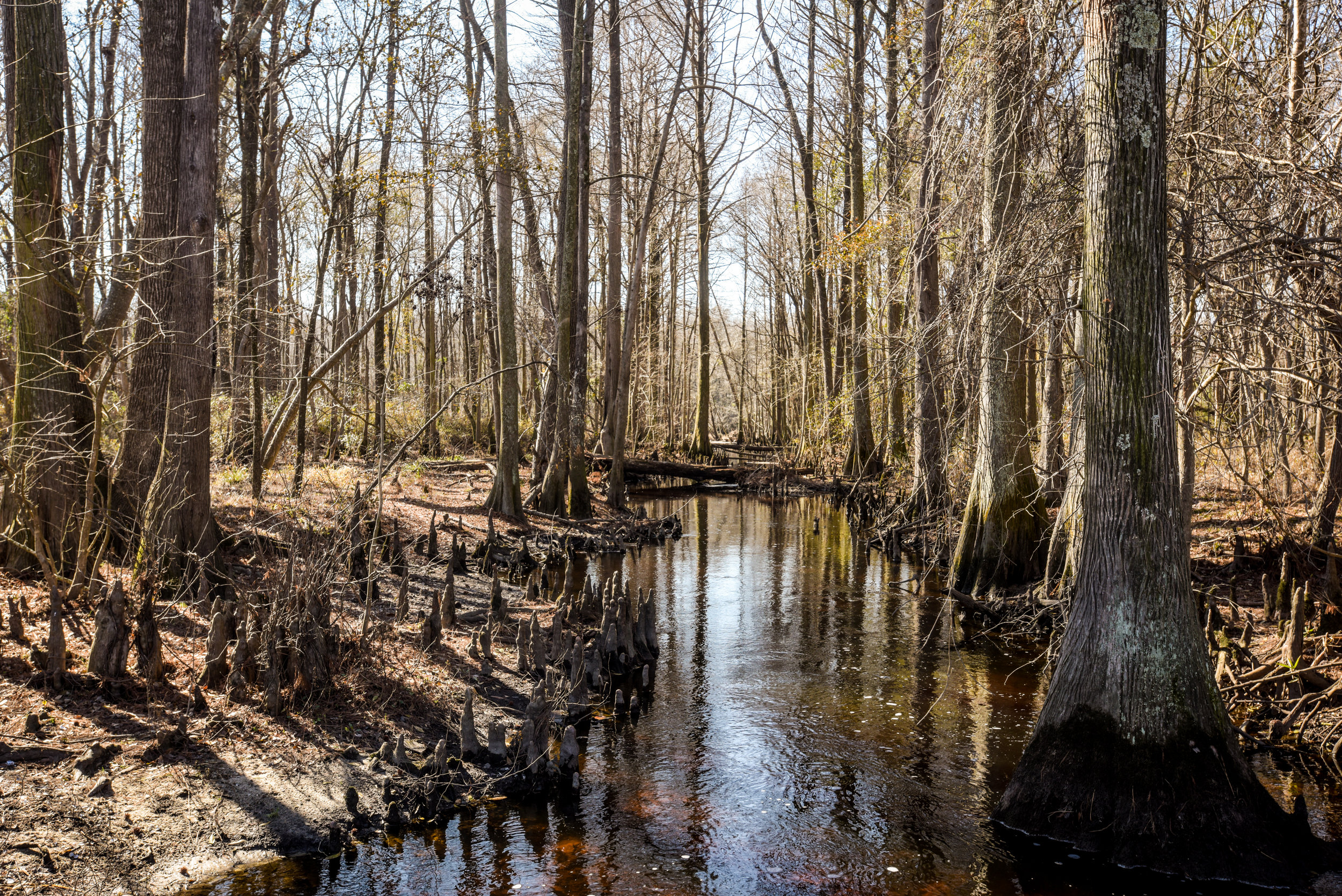 """""""Without the river giving us all the different food sources [and] cultural practices, we wouldn't be here as Native Americans, because the entire river is basically a constitution of our Native life,"""" Jorden Revels, a Native activist and sophomore studying at UNC Pembroke, says about the Lumber River."""