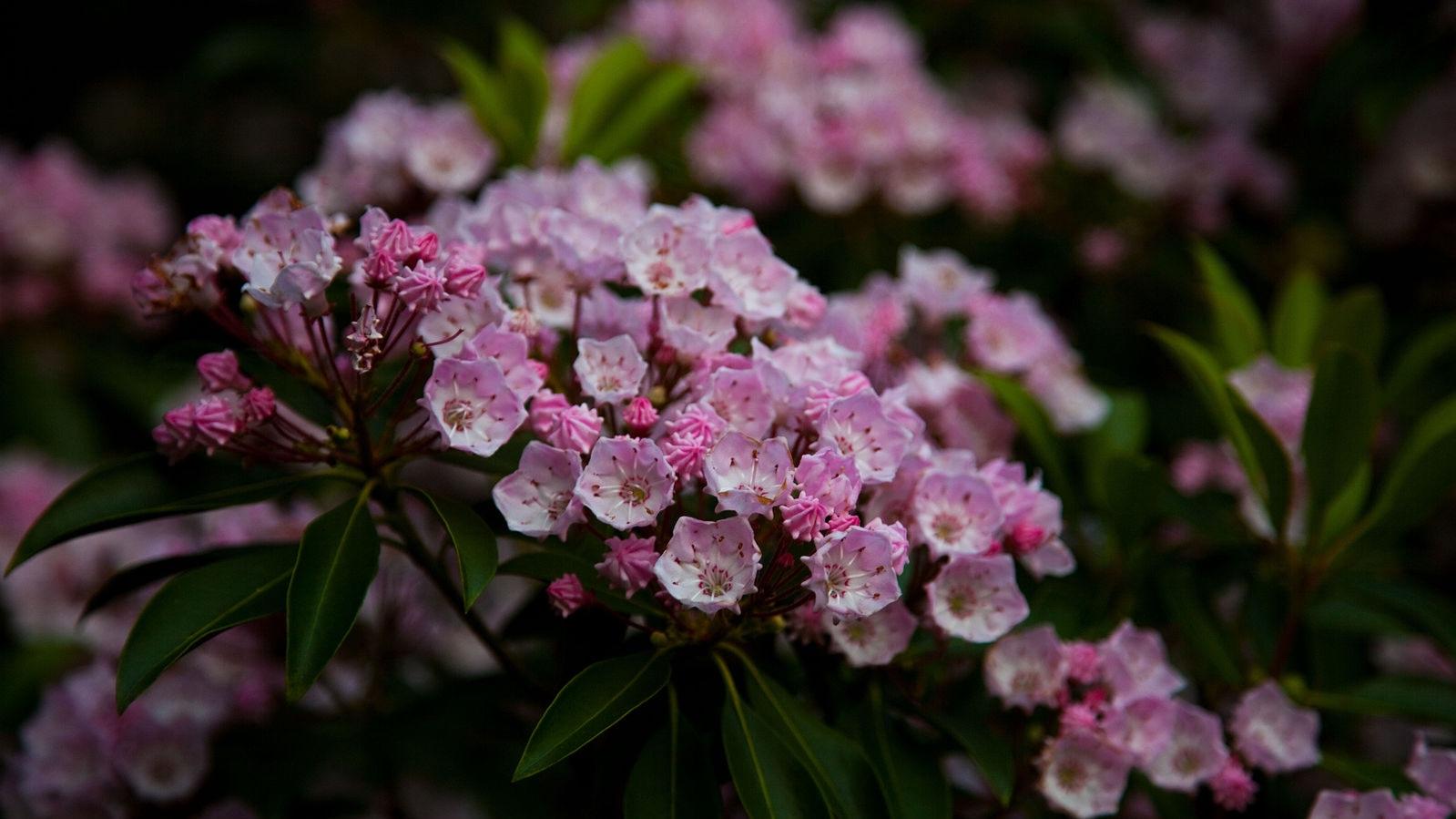 Wv-mountain-wildflowers-springtime_-_West_Virginia_-_ForestWander.jpg