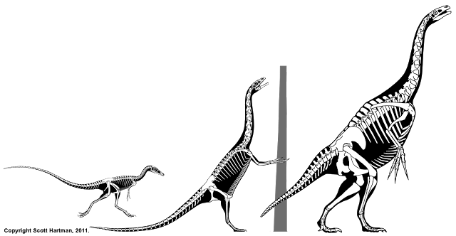 therizinosaur+sequence.png