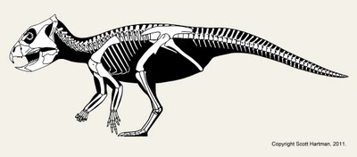 Archaeoceratops_neutral_arms.jpg