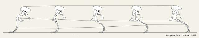 allosaurus+motion+study+-+Support+Phase.jpg