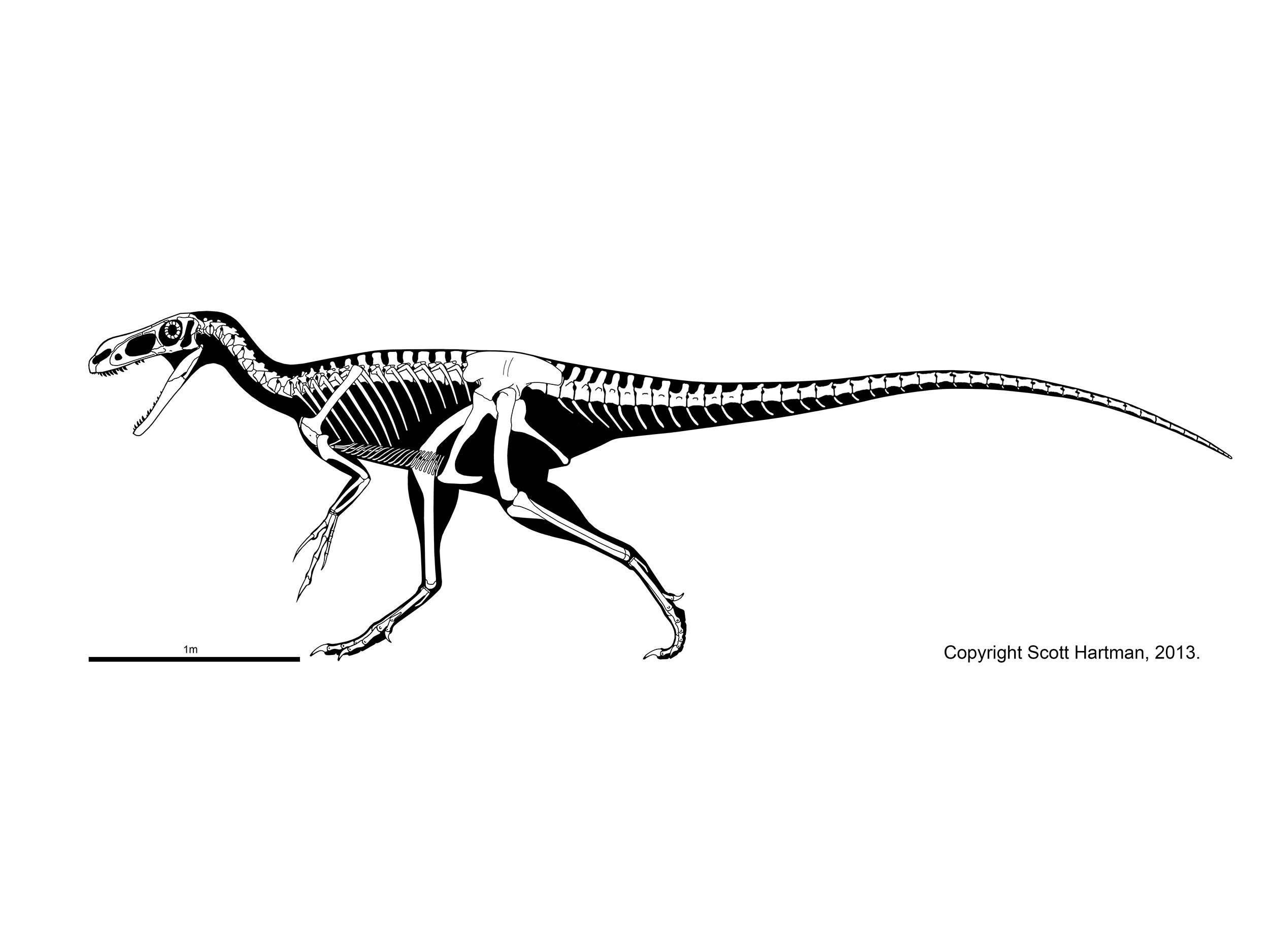Stokesosaurus clevelandi