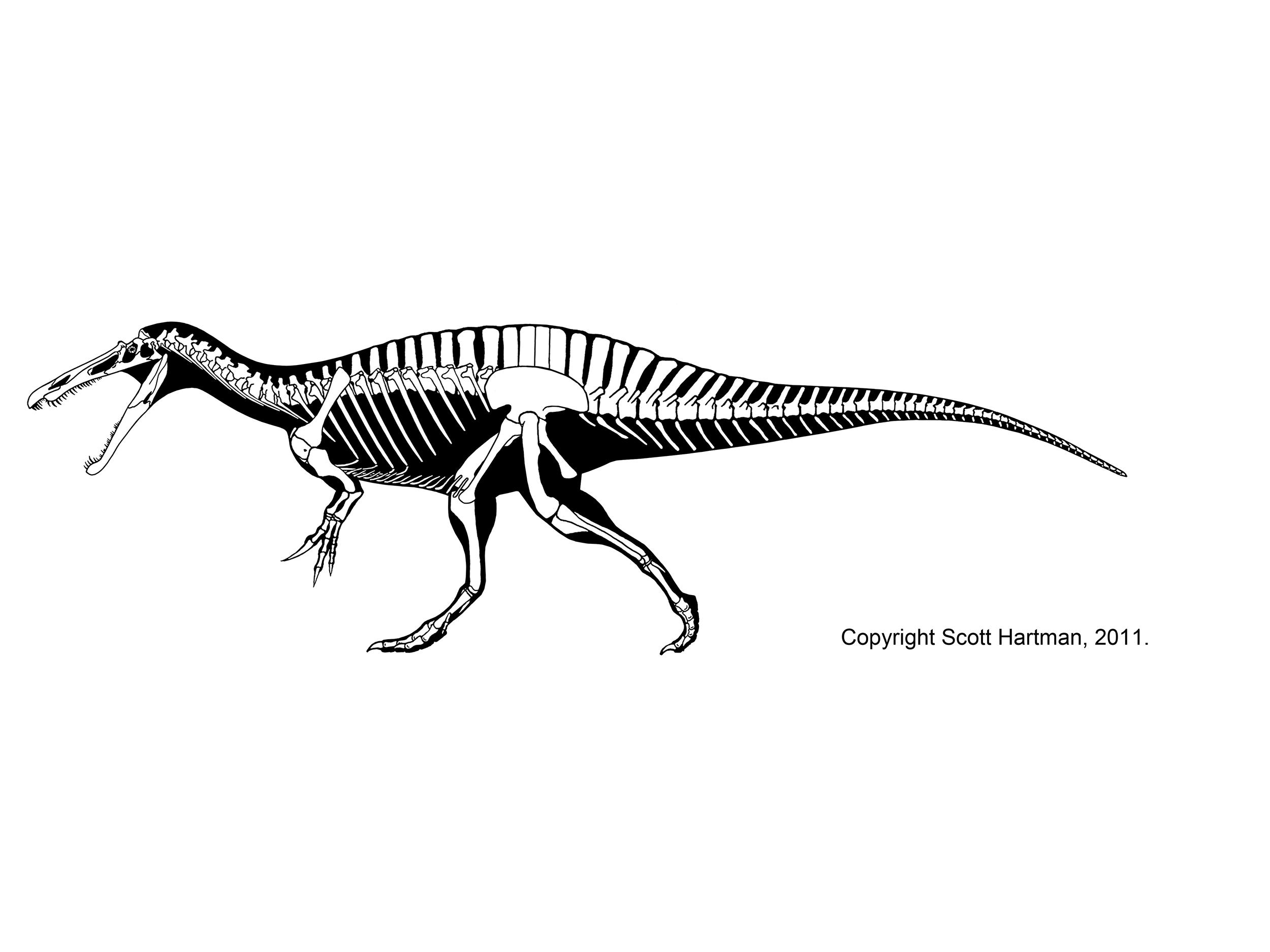 Suchomimus tenerensis