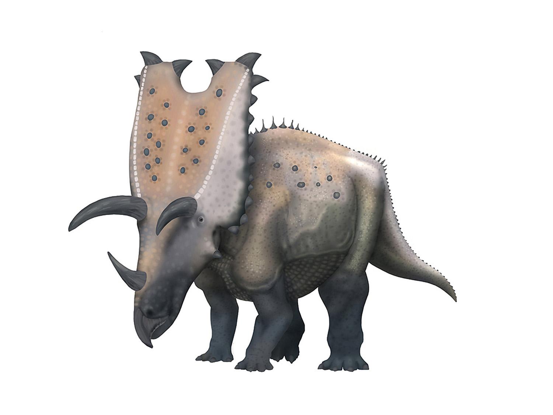 Pentaceratops.jpg