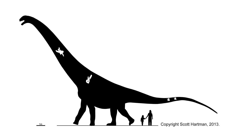 Puertasaurus reuili
