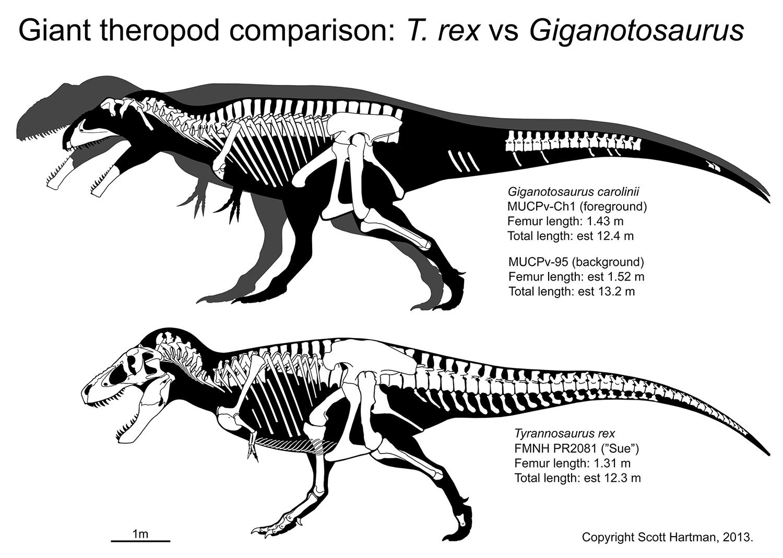 Sue vs Giganotosaurus4web.jpg