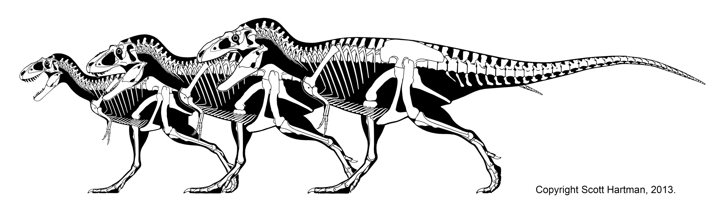 From left to right:  Teratophoneus, Lythronax, & Bistahieversor