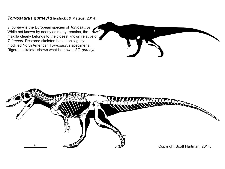 Torvosaurus gurneyi.jpg