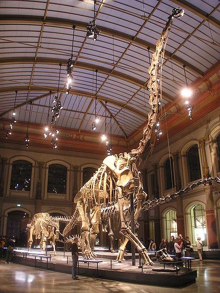 HMN SII, © Berlin Museum of Natural History, via WikiCommons.