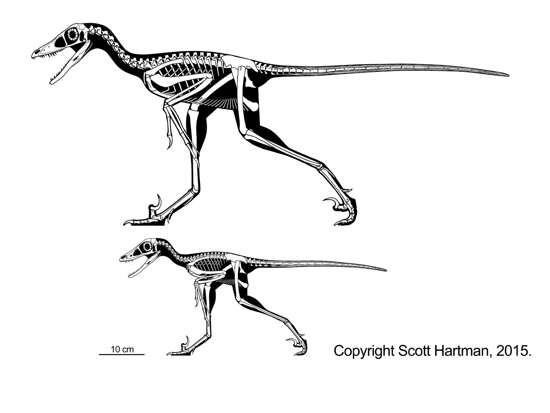 Sinornithosaurus adult & juvenile