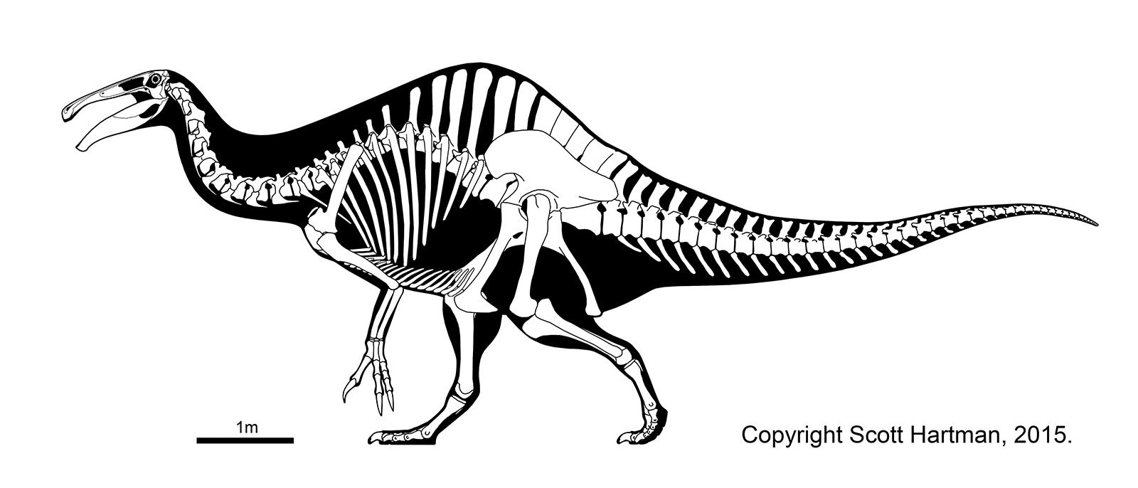 Deinocheirus skeletal
