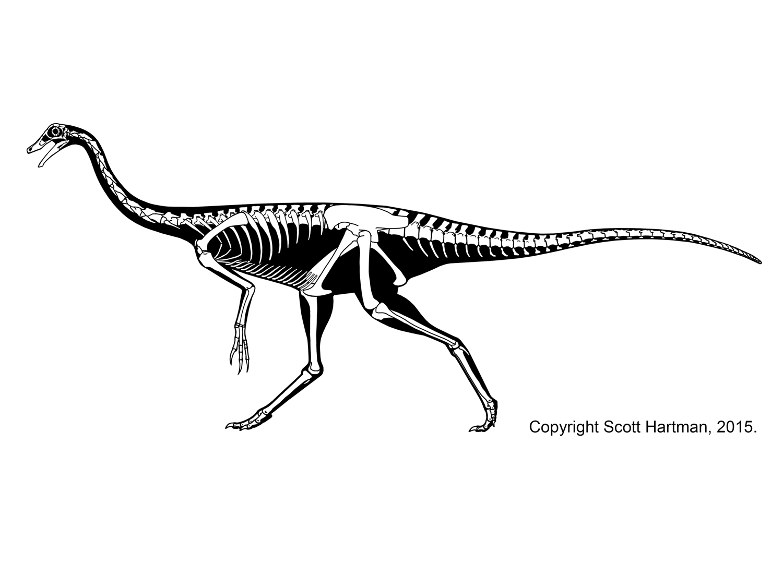 Struthiomimus sp
