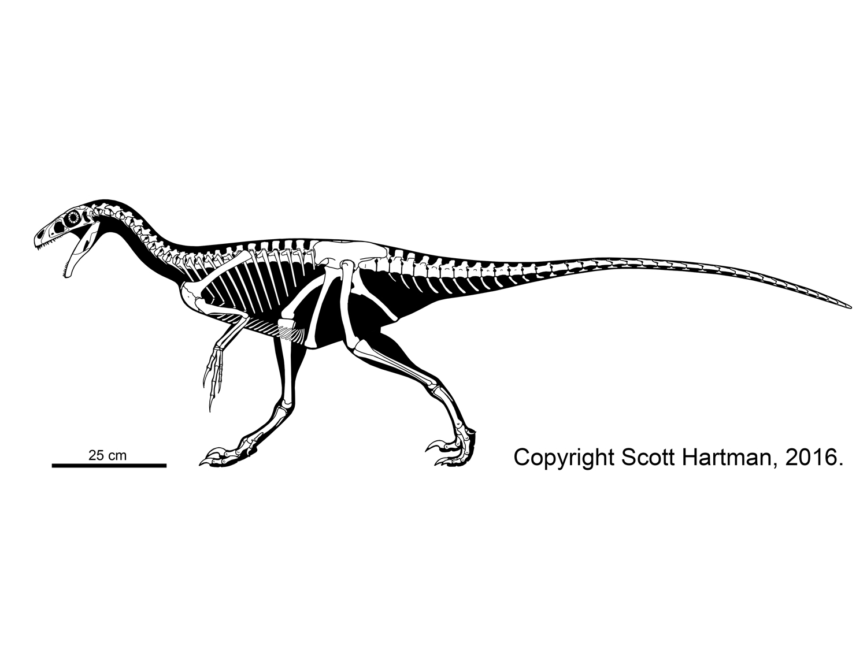 Ornitholestes hermanni