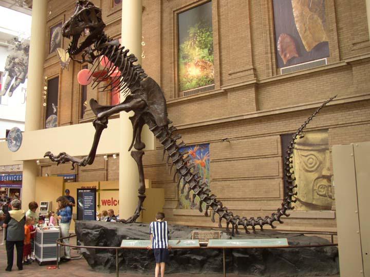 The DMNS's Rockette 'rex,  Source