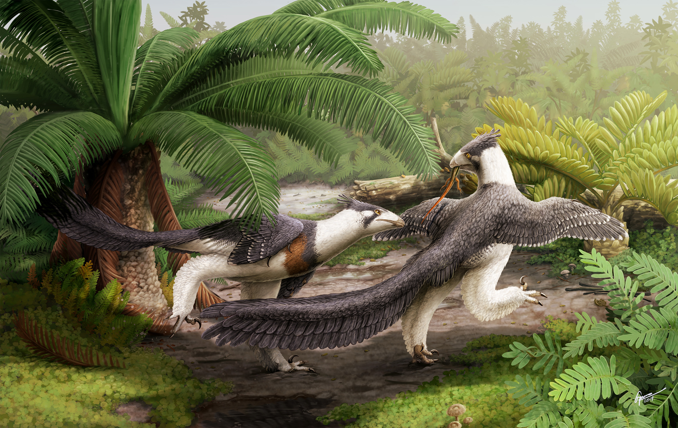 Two  Hesperornithoides  squabble over dinner - artwork by  Gabriel Ugueto