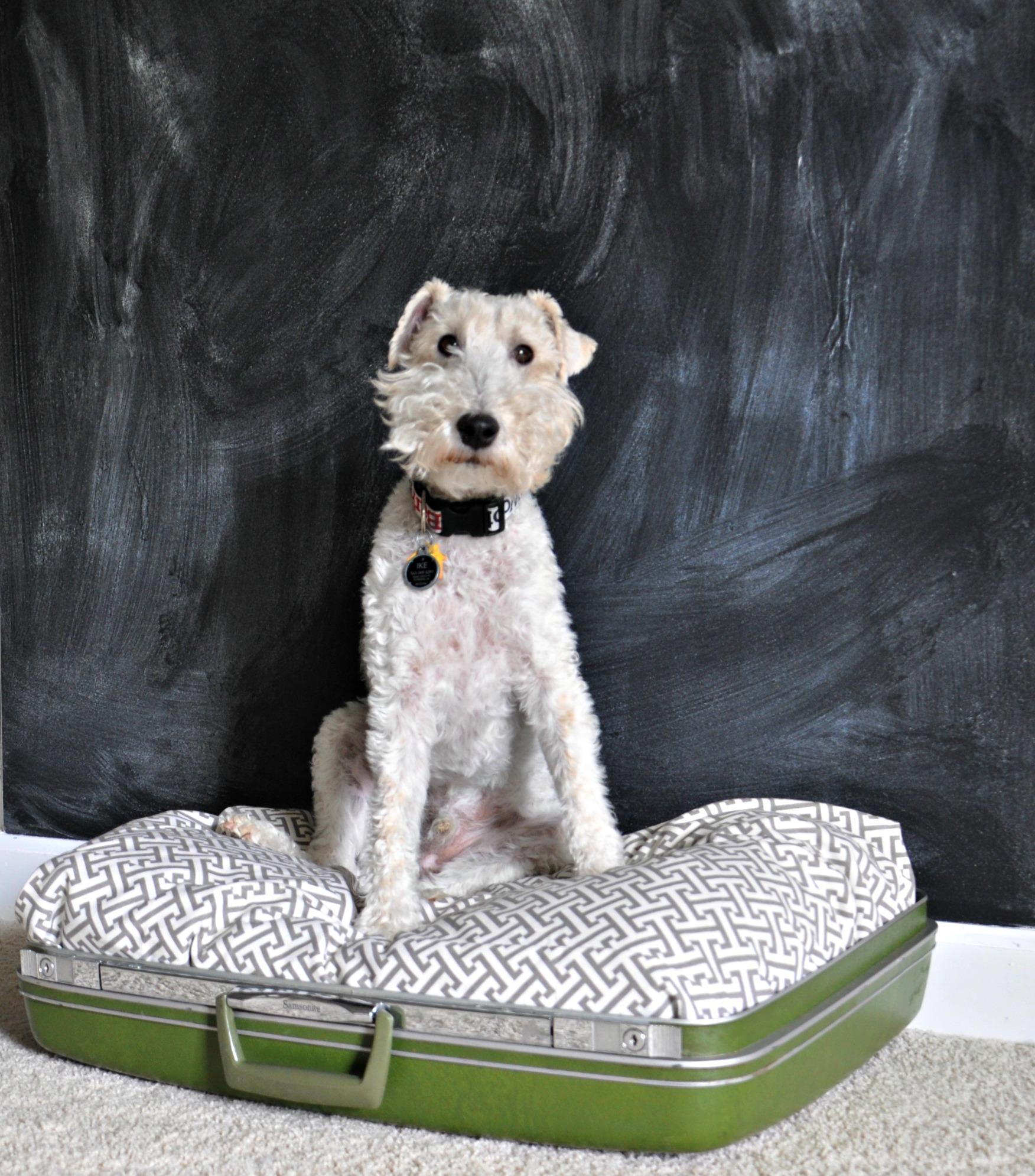 DIY Dog Bed {repurposed suitcase}.jpg